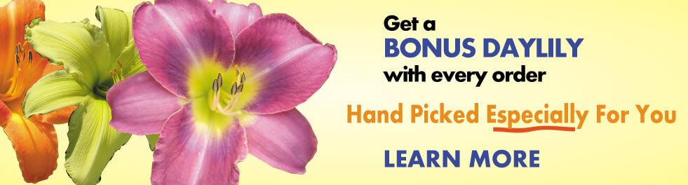 Bonus-Daylily-Banner-981x264