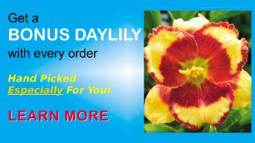 Bonus-Daylily-Banner-981x264-2