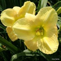 Viewing missy99912's Garden Diary: GH & Garden