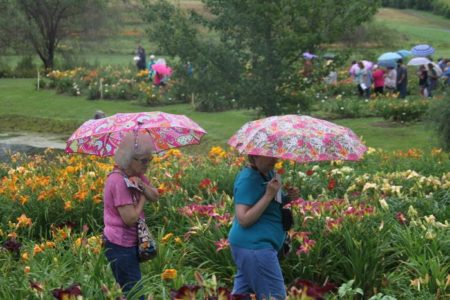 oakes-daylilies-umbrellas-festival