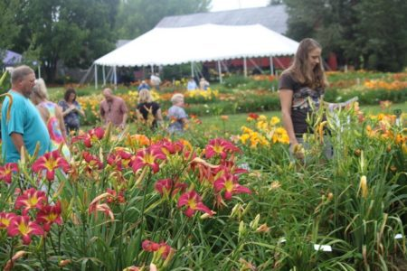 oakes-daylilies-festival-travel