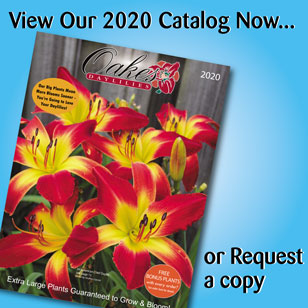 View or Request Catalog