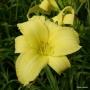 Oakes-Daylilies-Ida-Miles-daylily-001