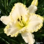 Oakes-Daylilies-Marque-Moon