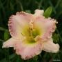 Oakes-Daylilies-Elusive-Happiness-daylily-003