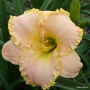 Oakes-Daylilies-Spring-Garden-Greeting-daylily-001