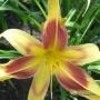 Oakes-Daylilies-Lady-Neva-003