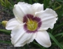 Oakes-Daylilies-Pandora's-Box-daylily-003