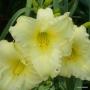 Oakes-Daylilies-Miss-Amelia-daylily-007