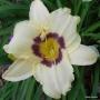 Oakes-Daylilies-Pandora's-Box-daylily-006