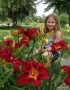Red-Volunteer-red-daylily-Dallas-Jent-Casey