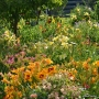 Oakes-Daylilies-Mix