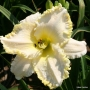 Oakes-Daylilies-Marque-Moon-001