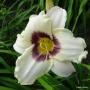 Oakes-Daylilies-Pandora's-Box-daylily-002